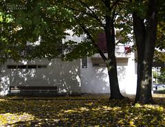 Jesen u Capljini (Nikola Miji, storm chaser) Tags: capljina autmn jesen apljina trees