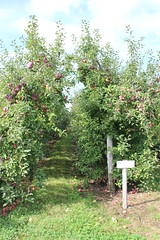 The Orchard (pegase1972) Tags: qc qubec quebec montrgie pommier apple tree verger orchard monteregie canada
