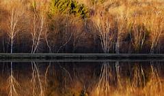 durand lake, NH (jtr27) Tags: dsc02573e jtr27 sony alpha nex7 nex emount mirrorless ilc ilce csc sigma 60mm f28 dn dna dnart sigmaart durandlake lake reflection autumn birch tree randolph newhampshire nh evening sunset