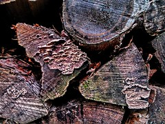 mouldy wood (Stiller Beobachter) Tags: wood mouldy decay rotten