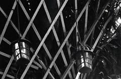 All Meshed Up (35mm) (jcbkk1956) Tags: plants lattice fence lights lamps mono blackwhite bangkok thailand design film 35mm analog yashica yashinon rangefinder ilfordpan100 ministerd wood