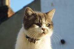 Pretty kitty (Moldovia) Tags: fujifilmfinepixhs50exr bridgecamera cat catnipaddicts catspotting catpix catalog catmoments catsunleashed feline pet animal kitten