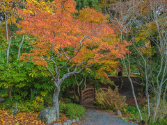 Hatley Park, Victoria BC (BethR.photography) Tags: autumn fall trees parks hatley seasons