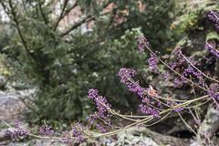 Erster Frost - 0013_Web (berni.radke) Tags: ersterfrost frost raureif wassertropfen rime eisblumen eiskristalle iceflowers icecrystals escarcha
