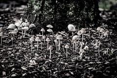 That time. (Omygodtom) Tags: outdoors mushrooms mushroom fungus bw scene scenic senery setting park nikkor diamond street nikon natural plant d7100 nikon70300mmvrlens