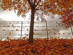 autumnal fence (Lutz Koch) Tags: fence zaun fencefriday laub autumn elkaypics lutzkoch herbst idstein zissenbach hff explore explored inexplore happyfencefriday