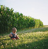 vote. (manyfires) Tags: hasselblad hasselblad500cm mediumformat square film analog henry boy toddler baby son love family iowa midwest corn field sunset golden magichour grass rural