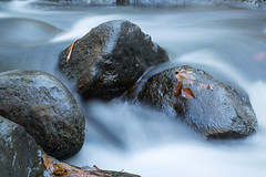 Water and Rocks (William_Doyle) Tags: black river hacklebarney state park water movement leaves rocks nature woods trees november 2016 canon vanguard