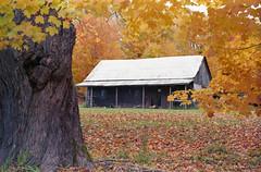 "Cabin in the woods (""Photo Guy"") Tags: 35mmcolourfilm barnsandoldbuildings falllandscape fuji200expired landscape"