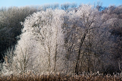 An der Wuhle (naturlicht) Tags: wuhle frost baum berlinhellersdorf berlin deutschland