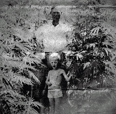 Marijuana Crop (~ Lone Wadi Archives ~) Tags: marijuana weed herb hemp crittendencounty kentucky rural mysterious unknown field weird strange odd peculiar farmer farming agriculture maryjane