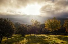 """Al otro lado del arco iris ( de """"palabras para Julia"""") (Argos351Photo) Tags: flores de otoo"""