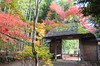 DSCF3810 (T.Machi) Tags: gate xf1 fujifilm kyoto autumn leaves colors thach japan wabisabi bamboo
