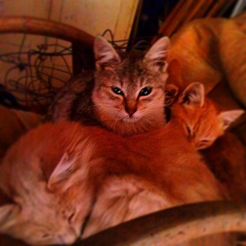 #cats #marsica