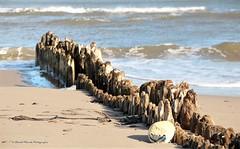 Dterioration lente / Slow detorioration (deplour) Tags: dunedebouctouche cocentreirving dune mer sea dtroit northumberland strait vagues waves piquets poteaux boue floater sand sable stakes pegs