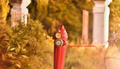 time goes by... (Ifigeneia Vasileiadis) Tags: time red fire hydrant swirly bokeh clock vintage retro gate autumn fall timeforchange helios 40285mm d7200 nature greece tatoi