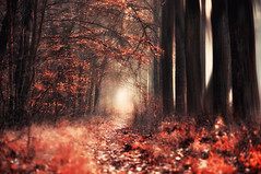 in the land of souls (eggii) Tags: withautumncolors nostalgiaofautumn autumn goldenlight road ontheway timeforthesilence forest light magic mist fog misty