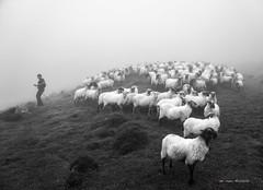 En busca de la oveja perdida (Jabi Artaraz) Tags: jabiartaraz jartaraz zb euskoflickr ovejaperdida pastor rebaño niebla montaña blancoynegro