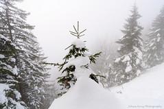 Christmas tree or snowman? (Johan Konz) Tags: mysterious mountain climbing forest trees matt cantonglarus switzerland snow outdoor landscape mountainside white sky mist fog alps nikon d90 whitebackground