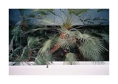 The Last Sunday (Punkroyaltiger) Tags: film analog mju kodak portra plants
