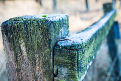 Frozen Fence Friday (Peter Jaspers) Tags: frompeterj 2016 olympus zuiko omd em10 hff fence happyfencefriday dof bokeh frost frozen winter hike moss vorst kalmthout putte ossendrecht kalmthoutseheide grensparkdezoomkalmthoutseheide belgie belgium brabant netherlands nederland cool blue aqua cold