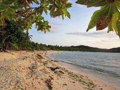 WONDER (PINOY PHOTOGRAPHER) Tags: matnog sorsogon nature leaves beach bicol bicolandia luzon philippines asia world