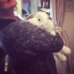 Teddy our newbie to our rescue ❤️ (frantictrish) Tags: love rescue ears cute fluffle bunnies rabbits bunny rabbit