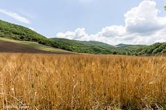 Nei pressi del torrente Orata (Vito Galgano) Tags: field natura campo orata escursione calitri