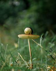 Snail on Shroom (CamMonkeh) Tags: cambridge summer nature mushroom countryside dof bokeh wildlife snail august fungi fungus colourful molluscs wandlebury fourthirds lowpov leica1450mm wandleburycountrypark