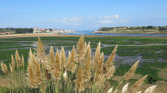 IMG_7796 (49Carmelo) Tags: playa arena marisma ria algas plumeros marcantabrico cantabriainfinita canong15