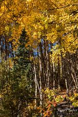 A very busy fall foliage scene