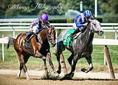 Mohaymen over Seymourdini (EASY GOER) Tags: horses horse ny newyork sports race canon track running racing 5d athletes races thoroughbred equine belmontpark markiii