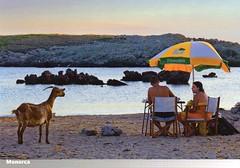 On the beach, Menorca,Spain (caijsa's postcards) Tags: people spain rocks goats beaches umbrellas menorca mediterraneansea balearicislands