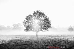 Hatfield Forest, Essex,UK (Eldorino) Tags: park uk morning autumn trees nature forest sunrise landscape countryside nikon britain centre jour hatfield bishops stortford essex hertfordshire stanstead hatfieldforest