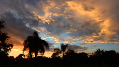 October 8th Sunset in Bradenton. (Jim Mullhaupt) Tags: pictures camera pink blue sunset red wallpaper sky orange sun color tree weather silhouette yellow clouds landscape photography gold evening photo nikon flickr sundown florida dusk snapshot picture palm exotic p900 tropical coolpix bradenton endofday cloudsstormssunsetssunrises nikoncoolpixp900 coolpixp900 nikonp900 jimmullhaupt