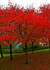 The Beauty Of Autumn (Javlamusik) Tags: autumn tree colors leaf leafs