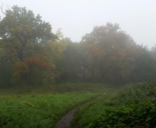 November comes in misty