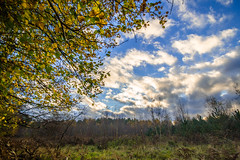 Blue Skies from Under Cover (kevbphotography) Tags: uk blue autumn red orange brown green forest woodland skies norfolk trres