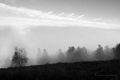 Paysage (rapetout14) Tags: white black france montagne landscape noiretblanc nb arbres nuages paysage arbre brume pyrnes midipyrnes croixblanche arrodets