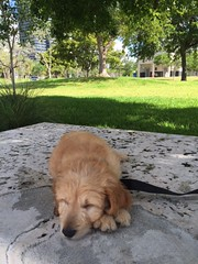 honey-and-cjs-brody-loves-hanging-in-the-park_18689443288_o
