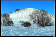 nEO_IMG_DP1U4793 (c0466art) Tags: world trip travel light sunlight lake snow cold weather canon photo amazing scenery view jeep bright princess hill grassland 2015  1dx c0466art