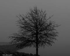 Standing Out In the Fog (that_damn_duck) Tags: bw nature fog blackwhite unitedstates southcarolina