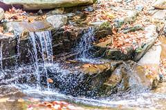 Hilton Area (11-10-16)-074 (nickatkins) Tags: fall fallcolors fallcolor fallfoliage autumn water sun sunlight stream
