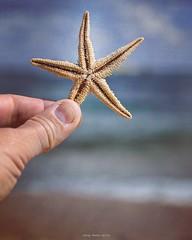 Rising star (oskaybatur) Tags: instagramapp kyky trakya trkiye turkey turkei 2016 oskaybatur pentaxk10d denizyldz starfish seashore october autumn closeup dof nature karadeniz pentaxart justpentax sigma1770 sky texture