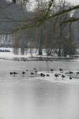 IMG_8394 (anthonywmthomas) Tags: tervuren parc winter landscape belgium