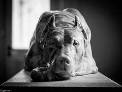 Chien (Eugercios) Tags: muse des beaux arts de lyon museo bellas artes france francia frana perro dog chien europa europe escultura sculpture arte art
