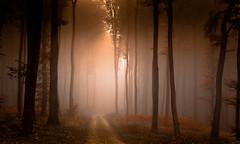 DSC_6679-1-2 (jeanbernardhames) Tags: fort lumire arbre tree octobre automne wow