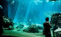 Vasca Dei Pesci - Oceanario Lisbona (antoniosimula) Tags: oceanario lisbon lisbona lisboa portogallo portugal area expo fish flora fauna nikon d3200 35mm 70300 tamaron ocean species pacific atlantic indian