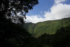 Waipio Valley (pajarero) Tags: hawaii 2016 honeymoon birds big island waipio