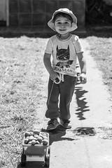 Valentino y el Camin de Frutos Verdes (Alvimann) Tags: valentino baby babyboy toddlerboy toddler nio nios varon hombrecito play juego jugando jugar juegos rostro rostros mirada mirar miradas face faces cara caras camion truck juguete playing fruta fruto fruit fruits green verde verdes inmaduros toy toys game games alvimann